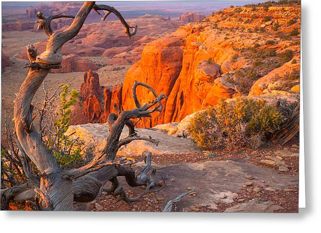 Twisted Remnant Greeting Card by Inge Johnsson
