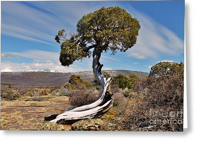 The Plateaus Greeting Cards - Twisted Sister Greeting Card by Janice Rae Pariza