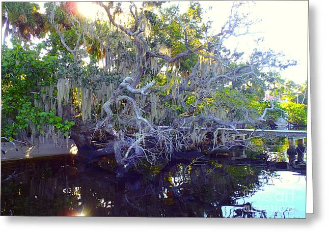 Hobe Sound Greeting Cards - Twisted tree Greeting Card by Carey Chen