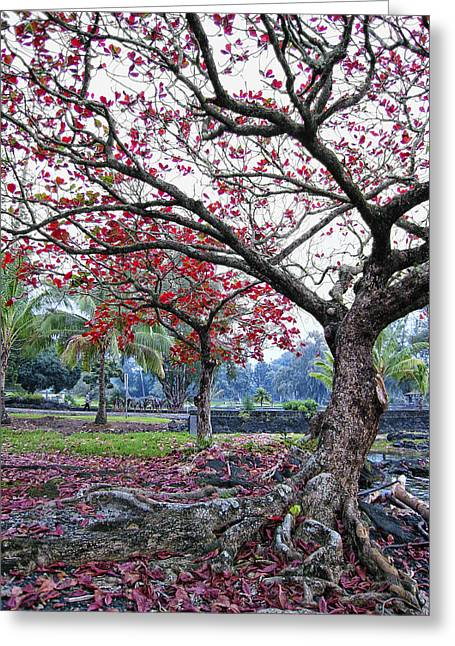 Ageless Greeting Cards - TWISTED TREE of HILO Greeting Card by Daniel Hagerman