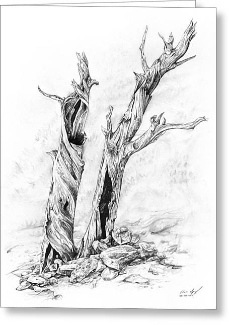 Quality Drawings Greeting Cards - Twisted trees Greeting Card by Aaron Spong
