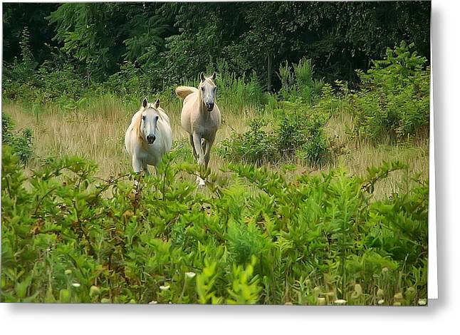 Horse Images Greeting Cards - Two Appaloosa Horses  Greeting Card by Chris Flees