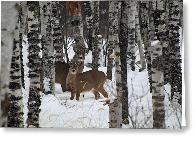 Peterson Nature Photography Greeting Cards - Two Are Better Than One Greeting Card by James Peterson