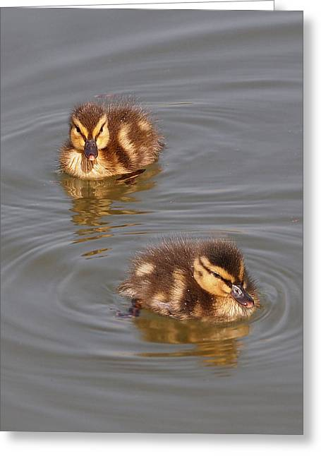 Ducklings Greeting Cards - Two Baby Ducklings Greeting Card by Gill Billington