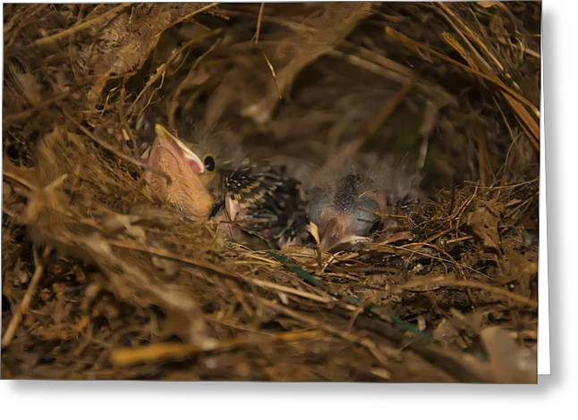 Sparrow Digital Art Greeting Cards - Two Baby Sparrows In A Nest Greeting Card by Chris Flees