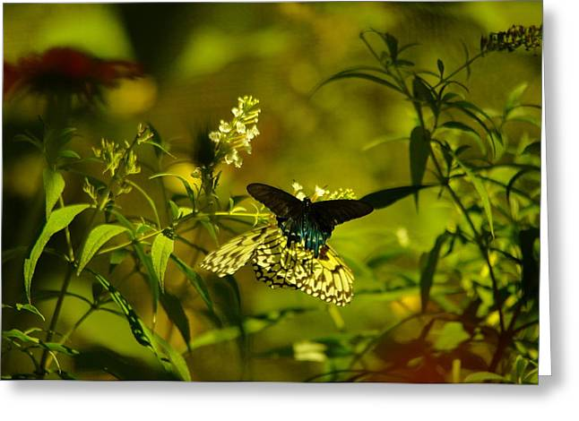 Flying Insect Greeting Cards - Two Beautiful Creations Greeting Card by Jeff  Swan