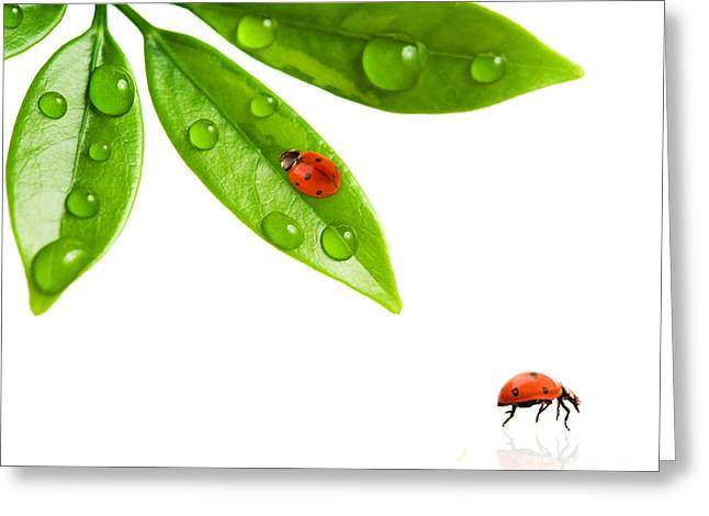 Nature Scene Pyrography Greeting Cards - Two Beautiful Ladybug Greeting Card by Boon Mee