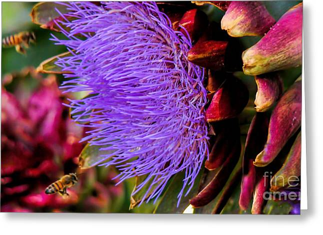 Floral Photographs Mixed Media Greeting Cards - Two Bees Greeting Card by Beverly Guilliams