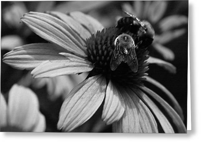 Photographs Digital Art Greeting Cards - Two Bees on Coneflower Greeting Card by Suzanne Gaff