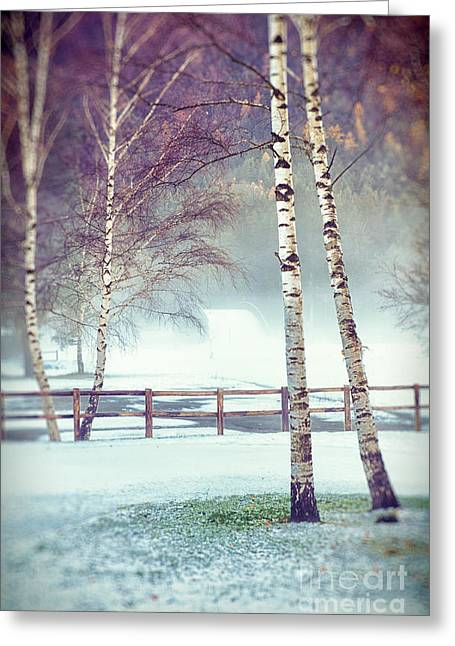 Wintry Photographs Greeting Cards - Two birches Greeting Card by Silvia Ganora