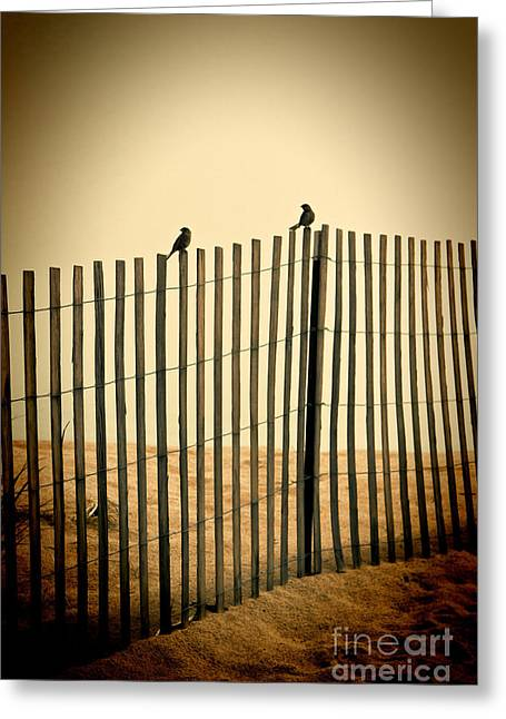 Seaside Decor Posters Greeting Cards - Two Birds On A Fence Greeting Card by K Hines