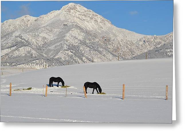 Photo Jewelry Greeting Cards - Two Black Horses Greeting Card by Anne Foster