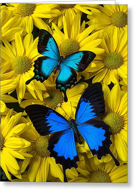 Seasonal Bloom Greeting Cards - Two Blue Butterflies Greeting Card by Garry Gay