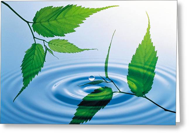 Blue Green Water Greeting Cards - Two Branches With Green Leaves Floating Greeting Card by Panoramic Images