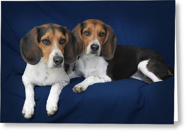 K9 Greeting Cards - Two Brothers Greeting Card by Christine Till