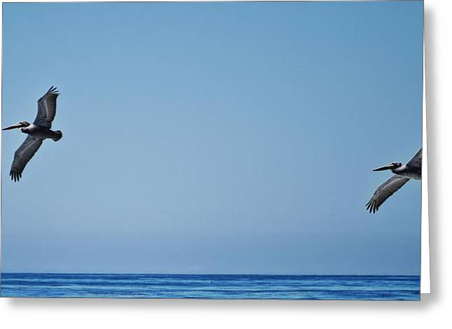 Tulane Greeting Cards - Two Brown Pelicans Greeting Card by Richard Cheski