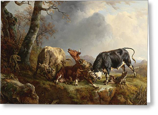 Grey Clouds Digital Art Greeting Cards - Two bulls defend against a cow attacked by wolves Greeting Card by Jacques Raymond Brascassat