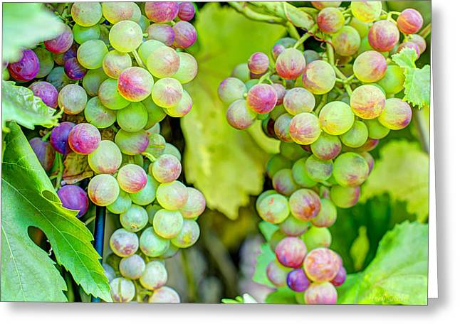 Blue Grapes Greeting Cards - Two Bunches Greeting Card by Heidi Smith