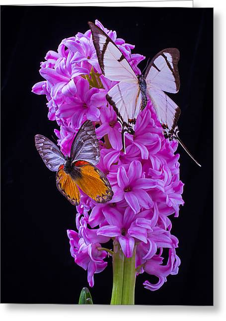 Gorgeous Flowers Greeting Cards - Two Butterflies Greeting Card by Garry Gay