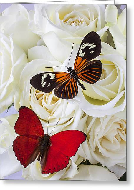 Roses Greeting Cards - Two butterflies on white roses Greeting Card by Garry Gay