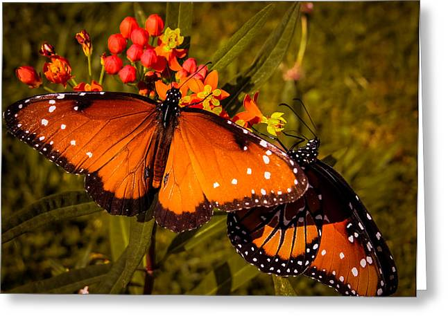 Print Photographs Greeting Cards - Two butterflies Greeting Card by Zina Stromberg