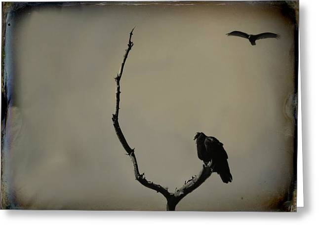 Turkey Buzzard Greeting Cards - Two Buzzards Greeting Card by Gothicolors Donna Snyder