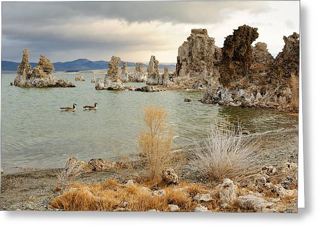 Dusk At The Lake Greeting Cards - Two canadian gooses on Mono Lake Greeting Card by Yevgen Timashov