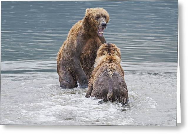 The North Greeting Cards - Two Coastal Brown Bears Face-off In An Greeting Card by John Delapp