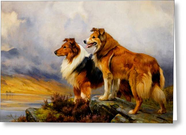 Wright Barker Greeting Cards - Two Collies Above A Lake DR Greeting Card by Wright Barker