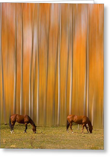 Horse Images Greeting Cards - Two Colorado High Country Mystic Autumn Horses Greeting Card by James BO  Insogna