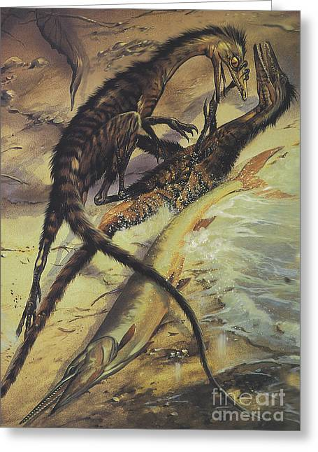 Two Compsognathus Dinosaurs Fighting Greeting Card by Jan Sovak