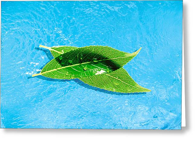 Blue Green Water Greeting Cards - Two Crossed Green Leaves Floating Greeting Card by Panoramic Images