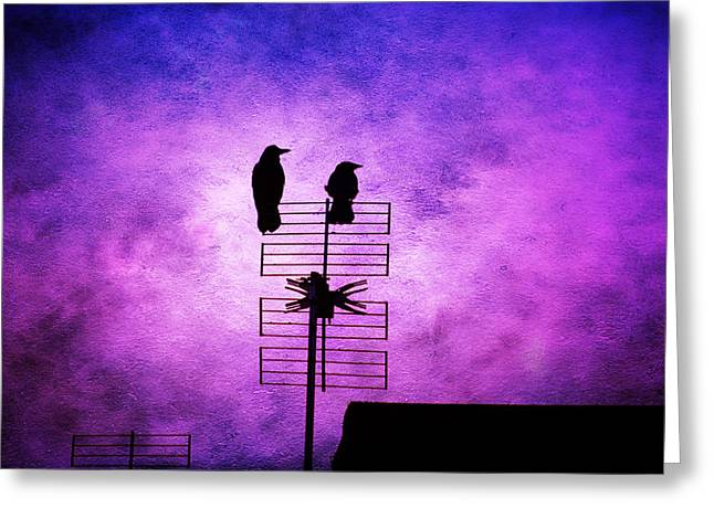 Duo Tone Greeting Cards - Two Crow Violet Greeting Card by Annabelle Ward