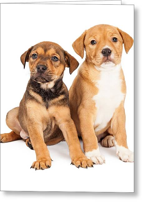 Litter Mates Photographs Greeting Cards - Two Cute Crossbreed Puppies Greeting Card by Susan  Schmitz