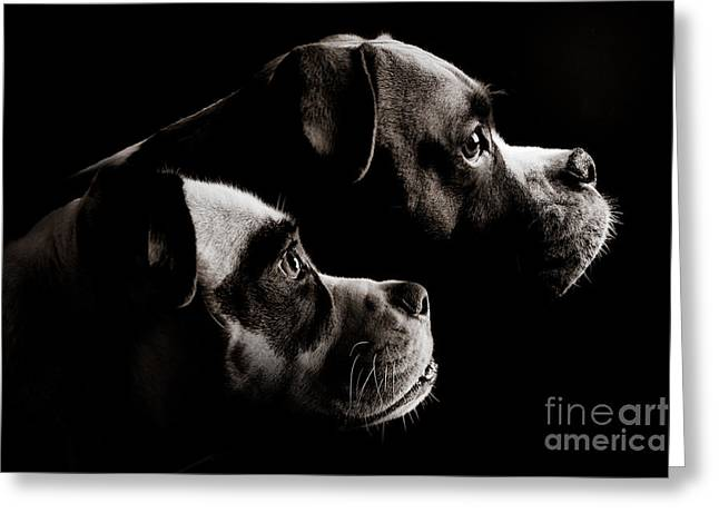 Watchdog Greeting Cards - Two Dogs Greeting Card by Jt PhotoDesign