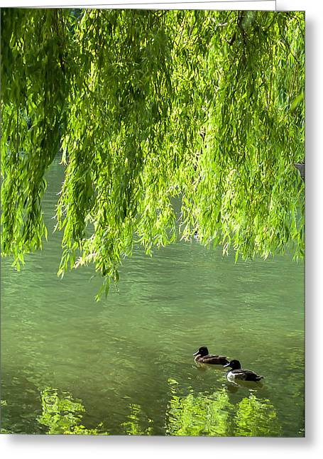 Willow Lake Greeting Cards - Two Ducks on Pond Greeting Card by Chay Bewley