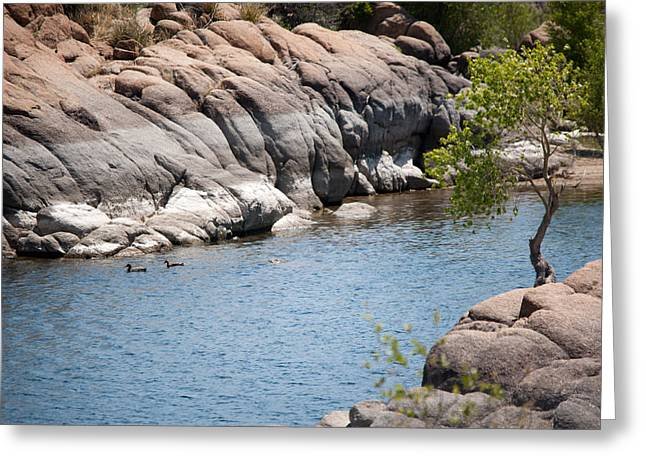 Watson Lake Greeting Cards - Two Ducks Greeting Card by Shannon Hastings