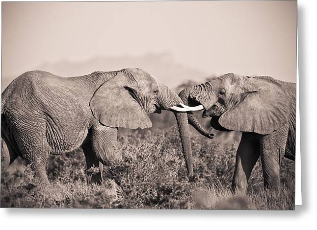 Love The Animal Greeting Cards - Two Elephants Greeting Card by David DuChemin