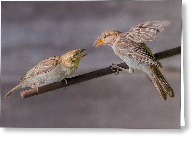 Two Finches Greeting Card by Rick Barnard