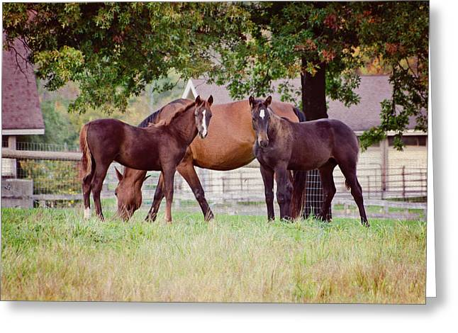 Umass Greeting Cards - Two Foals Greeting Card by Donna Doherty