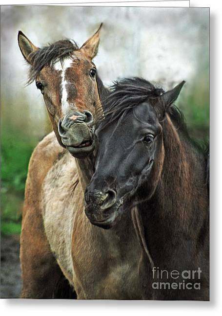 Love Horses Greeting Cards - Two Friends Greeting Card by Angel  Tarantella