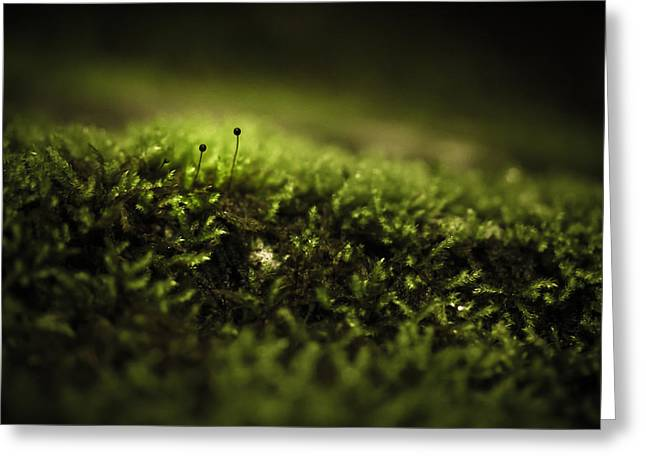 Moss Greeting Cards - Two-gather Greeting Card by Shane Holsclaw