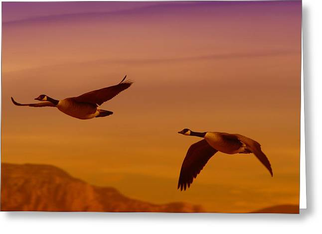 Living Things Greeting Cards - Two Geese In Flight Greeting Card by Jeff  Swan