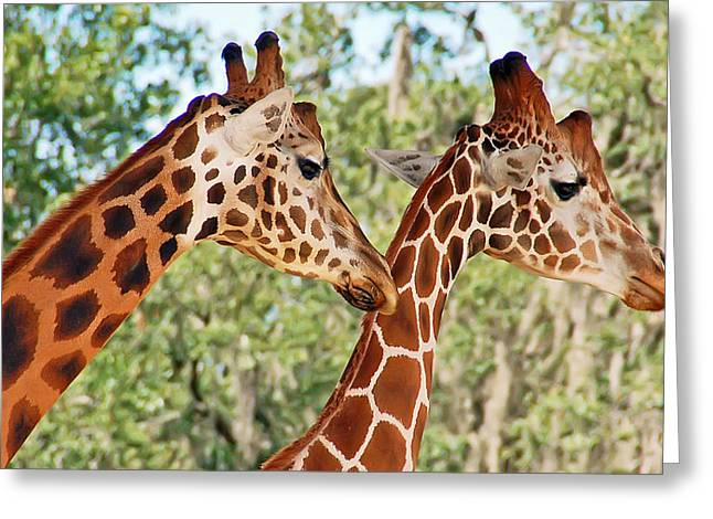 Two Giraffes Greeting Card by Aimee L Maher Photography and Art Visit ALMGallerydotcom