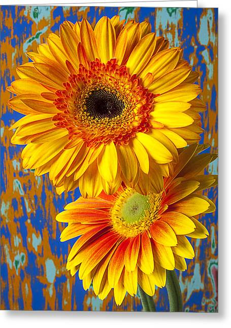 Gerbera Greeting Cards - Two golden mums Greeting Card by Garry Gay