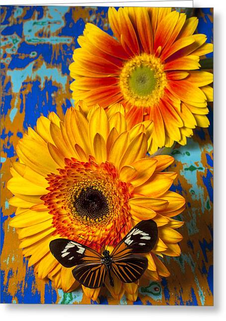 Gerbera Greeting Cards - Two golden mums with butterfly Greeting Card by Garry Gay