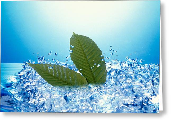 Green Leafs Greeting Cards - Two Green Leaves In Bubbling Water Greeting Card by Panoramic Images