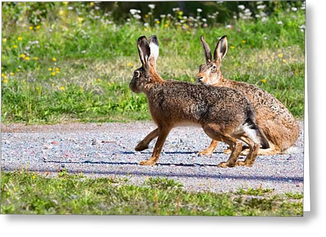 Pairs Greeting Cards - Two hares one sitting and one walking the way when the first one is viewing the environment Greeting Card by Leif Sohlman