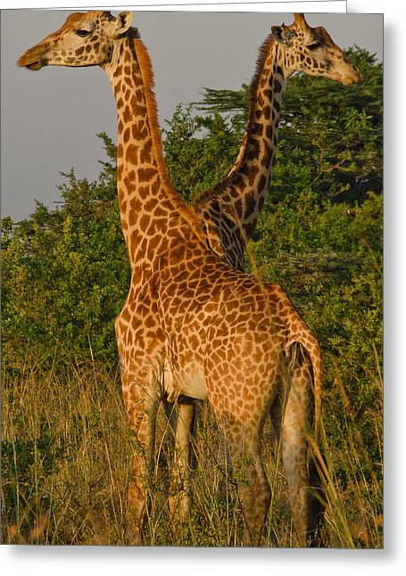 Wildlife Landscape Greeting Cards - Two Heads Are Better Than One Greeting Card by Aaron S Bedell