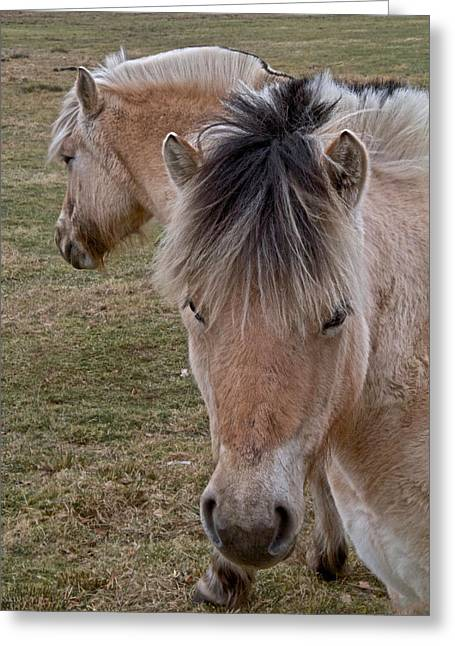 Yearling Horse Greeting Cards - Two Heads Greeting Card by Odd Jeppesen